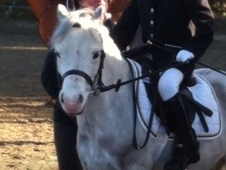 Lead Rein & First Ridden horse - 9 yrs 11.2 hh Dapple Grey - Nort...