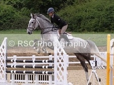 All Rounder horse - 6 yrs 16.2 hh Dapple Grey - Essex