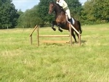 Reduced!!Absolute Gentleman, Fantastic Ror Prospect