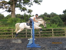 Amazing Allrounder For Sale