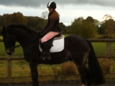 All Rounder horse - 10 yrs 2 mths 15.0 hh Black - Surrey