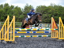 Genuine And Talented 138 Jc Jumping Pony