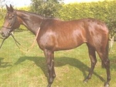Lovely 3 year old bay filly for sale with excellent breeding
