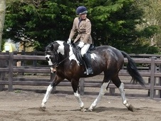 All Rounder horse - 5 yrs 16.1 hh Coloured - Somerset