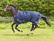 Elico Abberley Lightweight Turnout Rug - £42. 99
