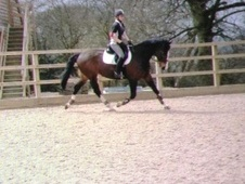 Dressage horse - 15 yrs 16.2 hh Dark Bay - Hampshire