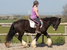 All Rounder horse - 6 yrs 2 mths 15.1 hh Black - Avon