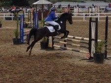 Talented Jumping/competition Pony