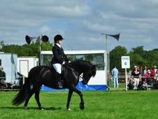All Rounder horse - 8 yrs 14.2 hh Black - West Sussex