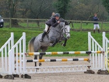 Lovely Big Grey Mare