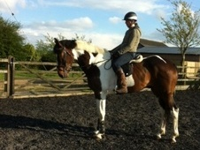 All Rounder horse - 6 yrs 1 mth 17.0 hh Coloured - Kent