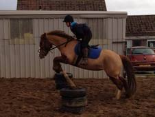 All Rounder, ideal project pony