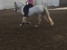 Fabulous pony for sale