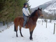 All Rounder horse - 9 yrs 15.2 hh Bay - Powys