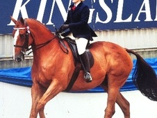All Rounder horse - 8 yrs 16.2 hh Chestnut - Cumbria