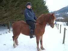 All Rounder horse - 4 yrs 14.2 hh Chestnut - Powys