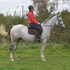 16.1hh Outstanding Horse in KENT