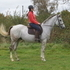 16.2hh VERY QUIET GENT in KENT