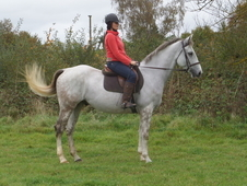16. 2hh Outstanding Horse In Kent