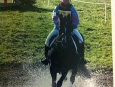 Striking 16. 2 Dark Bay Mare 16yrs