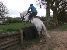 All Rounder horse - 8 yrs 14.2 hh Dapple Grey - Staffordshire