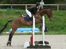 All Rounder horse - 7 yrs 16.2 hh Bay - Surrey