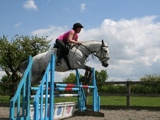 All Rounder horse - 7 yrs 14.0 hh Blue Roan - Kent