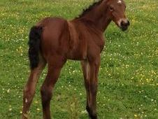 2014 Filly by Danny Kannan