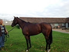 Ex racehorse needs a new home