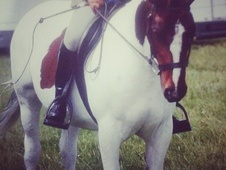 tri coloured mare for sale