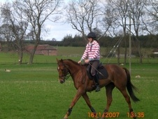 All Rounder horse - 9 yrs 16.0 hh Chestnut - North Yorkshire