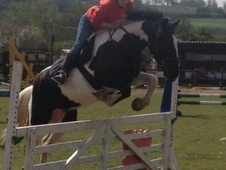 All Rounder horse - 8 yrs 14.2 hh Coloured - West Midlands