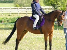 12. 2hh Lead Rein/first Ridden