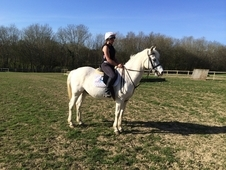Riding school horse looking for loving family home