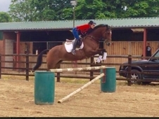 Talented and genuine Irish mare