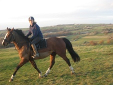 All Rounder horse - 8 yrs 3 mths 16.0 hh Bay - West Yorkshire