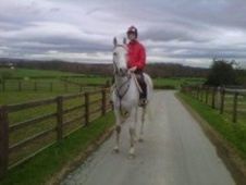 All Rounder horse - 13 yrs 16.1 hh Grey - North Yorkshire