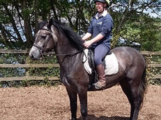 4 year-old - Connemara - All Rounder - Gelding - 14.2 hh - Powys