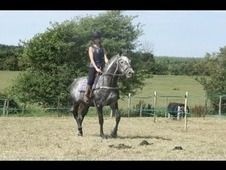 Ned 15. 3hh ex racer.