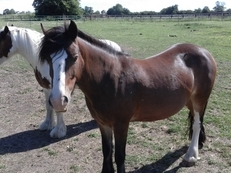Two Ponies to share KT18 Epsom