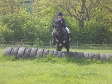 All Rounder horse - 6 yrs 13.0 hh Black - Essex