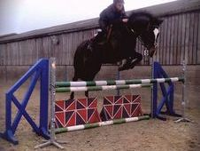 6 Years Gelding By Unbelievable Darco