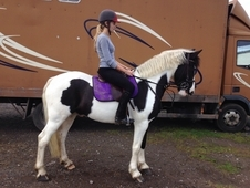 Stunning Coloured Gelding
