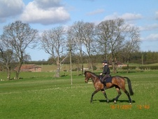 All Rounder horse - 9 yrs 16.3 hh Bay - North Yorkshire