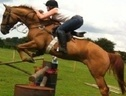All Rounder horse - 7 yrs 10 mths 16.3 hh Chestnut - Northamptonshire