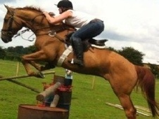 All Rounder horse - 7 yrs 10 mths 16.3 hh Chestnut - Northamptons...