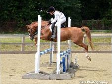 Stunning 12. 2 gelding. All rounder/ Pony club pony