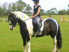 **reduced** Flynn - Coloured Irish Cob - 15hh