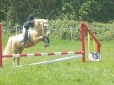 All Rounder horse - 6 yrs 1 mth 12.0 hh Palomino - Essex
