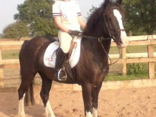 14hh 5yo Potential Competition Pony